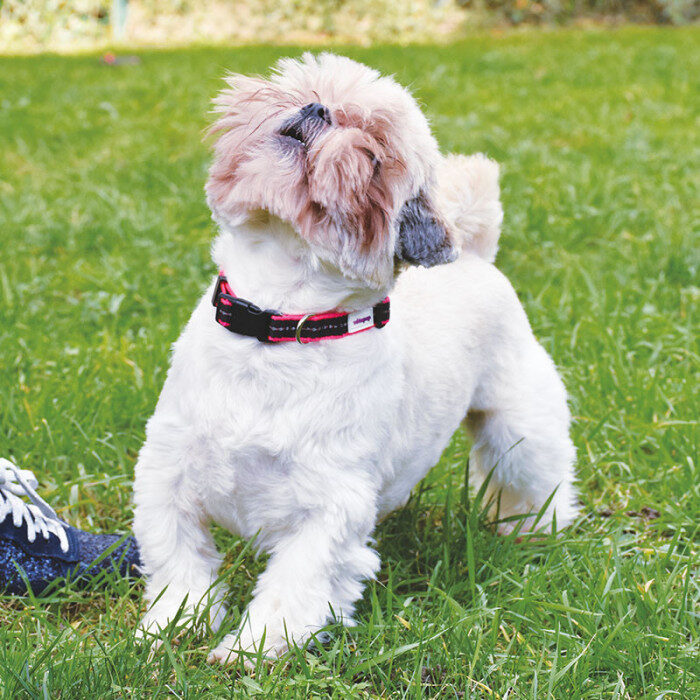 VetoPop kakla siksna sunim, fuksijas krāsā