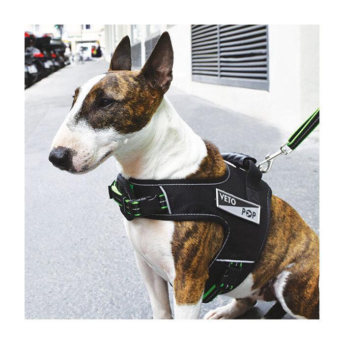 VetoPop krūšu siksna sunim, zaļa